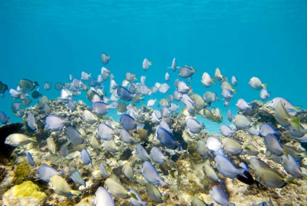 HALLO! Nemo, hvor er du? Great Barrier Reef er et eldorado for fiskeelskere.