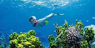 STØRST: Great Barrier Reef - verdens største korallrev.