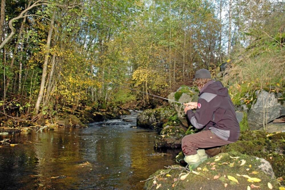 TANGENELVA: Den vesle elva ligger midt i gjeddeland, men utrolig nok huser den en liten ørretstamme.