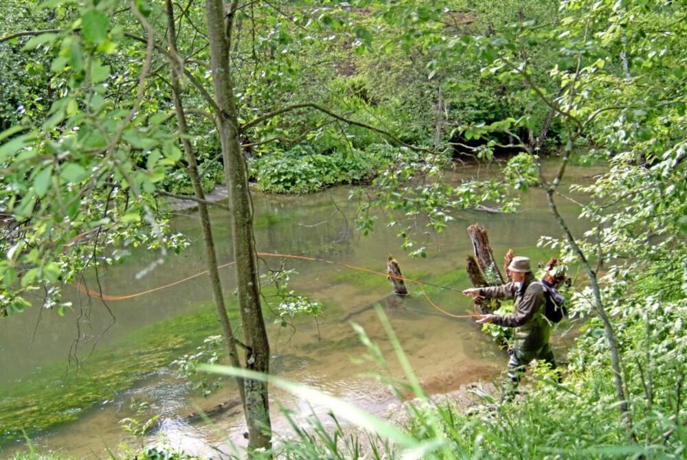 JUNGEL: Det er ikke så enkelt å fiske med flue i Risa, men det går. Parti fra den nedre delen av elva, der harren dominerer.