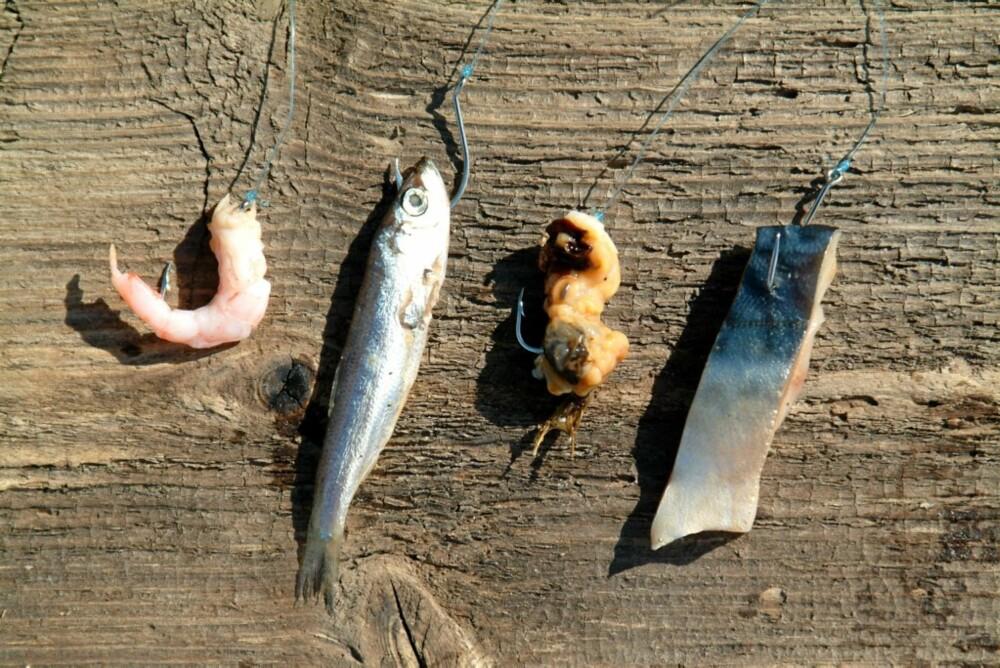 FIRE VANLIGE: Reke, brisling, blåskjell og makrell - fire av de vanligste saltvannsagnene. Du trenger egentlig ikke mer. Alle agnene er festet på en krok i str. 1/0, som er en egnet størrelse for mindre fisk langs kysten.