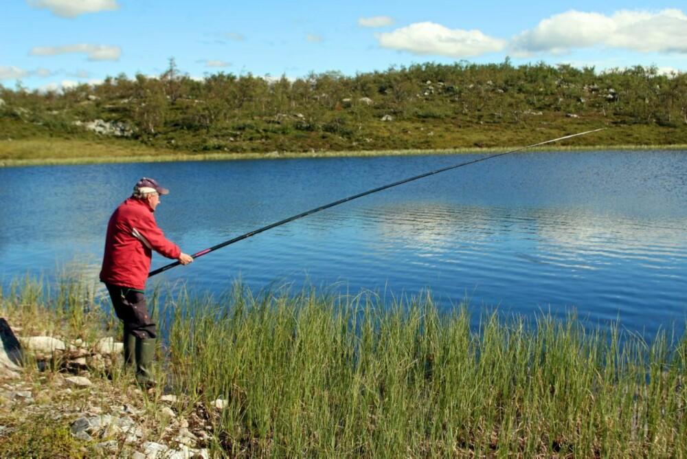 SNØRING I TOPPEN: Gamlekara fisket med toppknytt line nær land, og fikk fisk - og får det fortsatt.