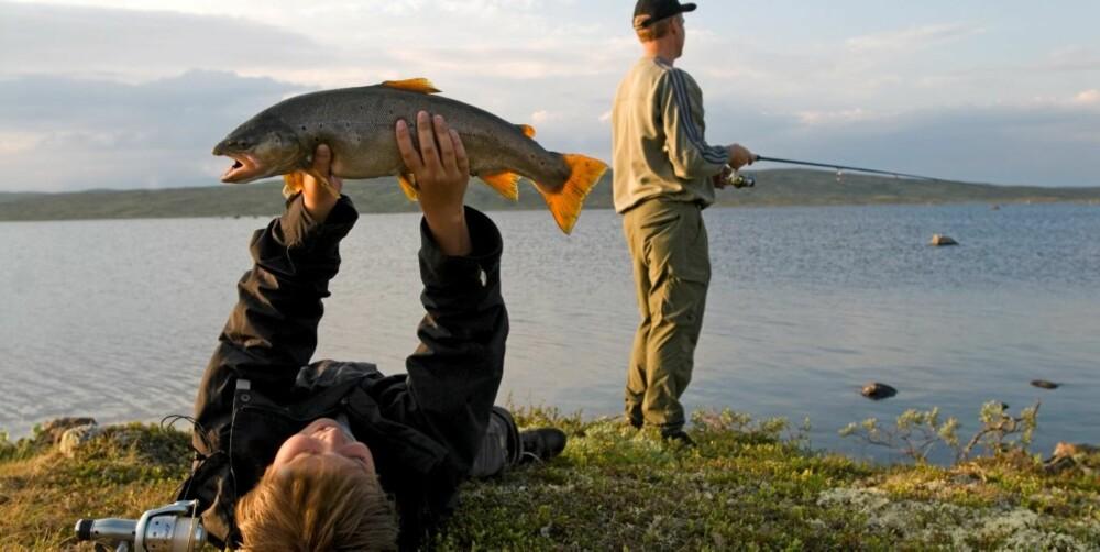 SKJERJAS SKATTKISTE: En slik ørret er svaret på mange sportsfiskeres drømmer!