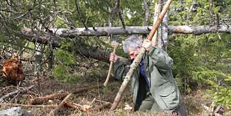 2. Hjørnestokkene til en gapahuk kan spisses og bankes ned i jorda for å sikre stødighet, eller du kan støtte disse opp med en ekstra stokk.