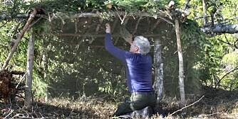 5. En tradisjonell gapahuk med granbartak er snart ferdig. Det er både raskere og mer vanntett å bruke presenning til tak.