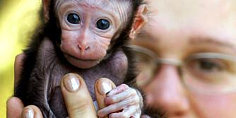 FARLIGE DYR: Løse hunder og katter kan gi trøbbel - men husk at andre dyr, som nusselige aper, også kan være smittebærere.