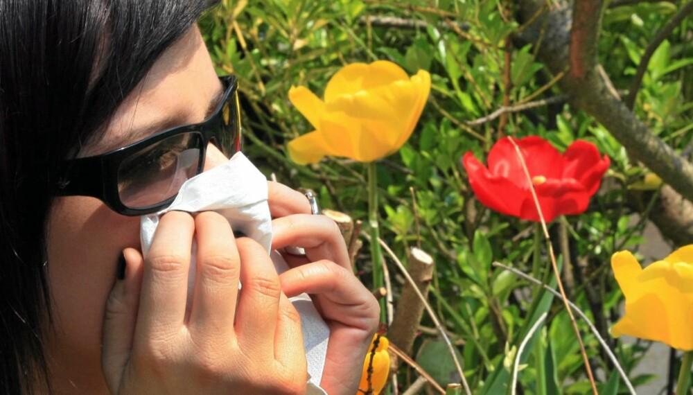 POLLENSESONGEN ER I GANG: Pollenallergien kan komme like overraskende hvert år. Kløe i øyne og nese er et sikkert tegn.