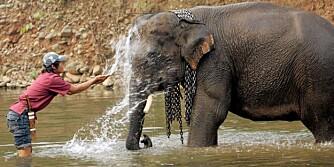 ASIATISK ELEFANT: Elefanten Xiguang er en asiatisk elefant som ble dopet ned av smuglere. Etterpå måtte han på tre års avvenning.