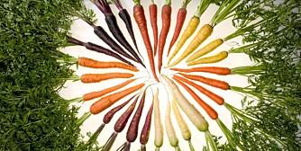 MANGFOLD: Det finnes mange gulrøtter mellom himmel og jord.