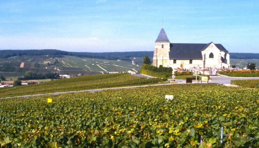 CHAMPAGNE: Chavot-kirken fra 1100-tallet i vinmarkene utenfor Epernay.