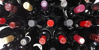 Rødvin til lam og vilt