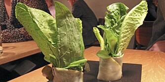FØRSTE RETT: Salatblader med sellerirot.
