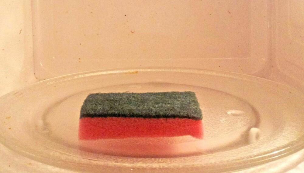 I MIKRO: Kjøkkensvampen kan være full av bakterier, men et minutt i mikrobølgeovnen tar knekken på det meste.
