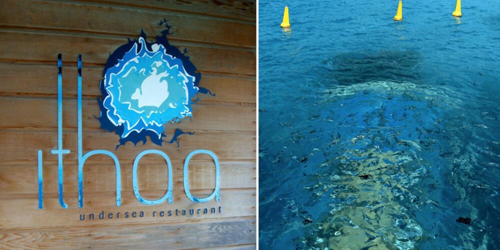 NEMO: På Maldivene kan du spise blant gullfisk og haier.
