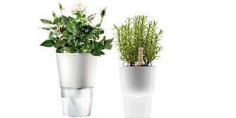 SELVVANNINGSPOTTE: Potten skal gjøre at urteplantene holder seg lenge. Men, du må likevel huske å fylle vann på glassbeholderen nederst.