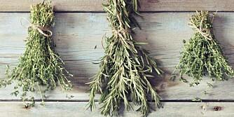 TIL TØRK: Godt tørkede urter som finkuttes eller mortes, vil holde seg i minst ett år.