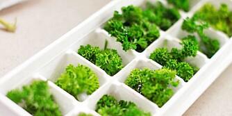 SMÅ PORSJONER: Du kan også fryse ned urtene i isbitbrettet uten vann eller noe annet: så har du praktiske porsjoner.