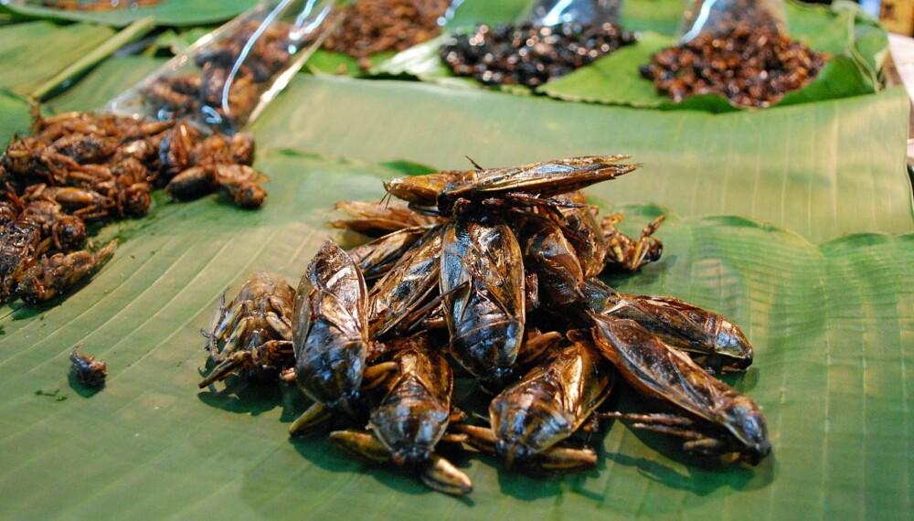 FRISTENDE? Hva med noen deilige insekter? Disse ble fotografert i Thailand.