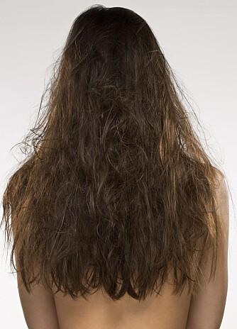 TØRT OG BRUSETE HÅR: Nesten alle hår trenger ekstra fuktighet når det blir kaldere i været.