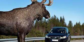 Volvo, sikkerhet, elg