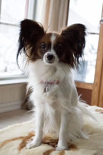 FLINK: Annie har blitt trent som krefthund hele livet, men ble først godkjent til tjeneste i fjor.