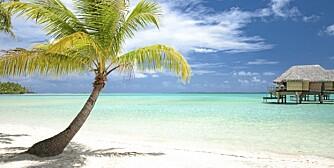 TROPISK PARADIS: Er dette drømmen for deres familie, eller er storbylivet det som frister mest?