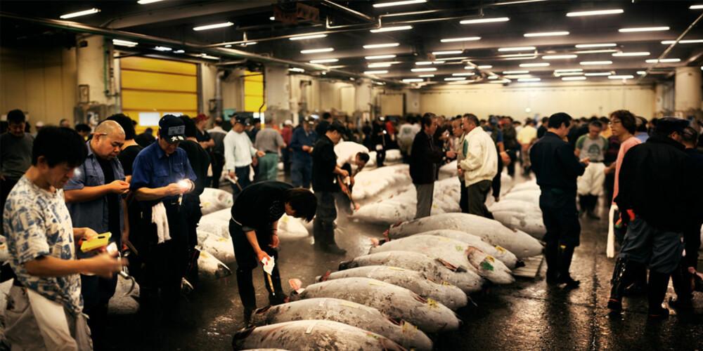 TUNFISK-AUKSJON: Om du har morgenen med deg, bør du ta turen innom verdens største fiskemarked.