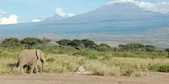 SNØEN SMELTER: Også på Afrikas høyeste fjell merkes det at verden har blitt varmere. Her smelter snømassene i raskt tempå.