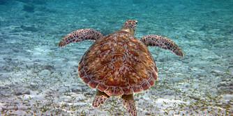 ØDELEGGES: Orkaner, fisking og turisme er dårlig nytt for verdens korallrev.