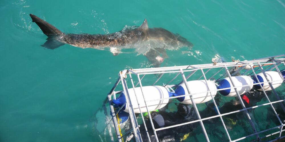 DYKKERE I BUR: Slik ser buret dykkerne blir senket ned i, sikret med flytebøyer og gitter. FOTO: Hennie Krugel ved Great White Shark Tours
