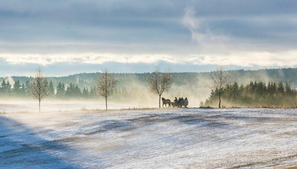 SOM ET JULEKORT: Å dra på juletrehogst med hest og slede står i sterk kontrast til mørke bensinstasjoner og overfylte hagesentra.