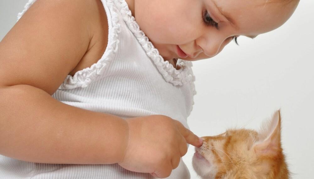 Når man omgås med dyr så må man være svært nøye med håndhygiene. Foto: Colourbox.no