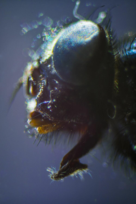 FLUE: For å ta bilde av hodet på en flue trenger du en hel kjøkkenrull. Skal du ha med hele fluekroppen i tillegg må du nok nedgradere til en dorull, eller en enda kortere sylinder.