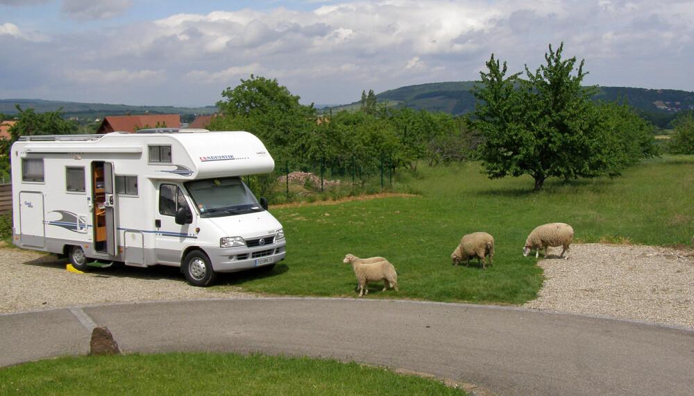 ÅLREIT: Å campere landlig kan være like ålreit som sauer. FOTO: France Passion