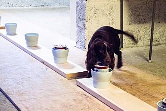 PÅ JAKT: Belønningen hunden får, er en leke eller ball. All behandling av prøver og bokser skjer med engangshansker, slik at ikke hundene skal bli forvirret av smittelukter.