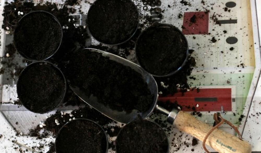 KLART TIL Å SÅ: Det er lettere enn du tror å dyrke din egen mat. Første steg er å gå til innkjøp av god jord og frø.