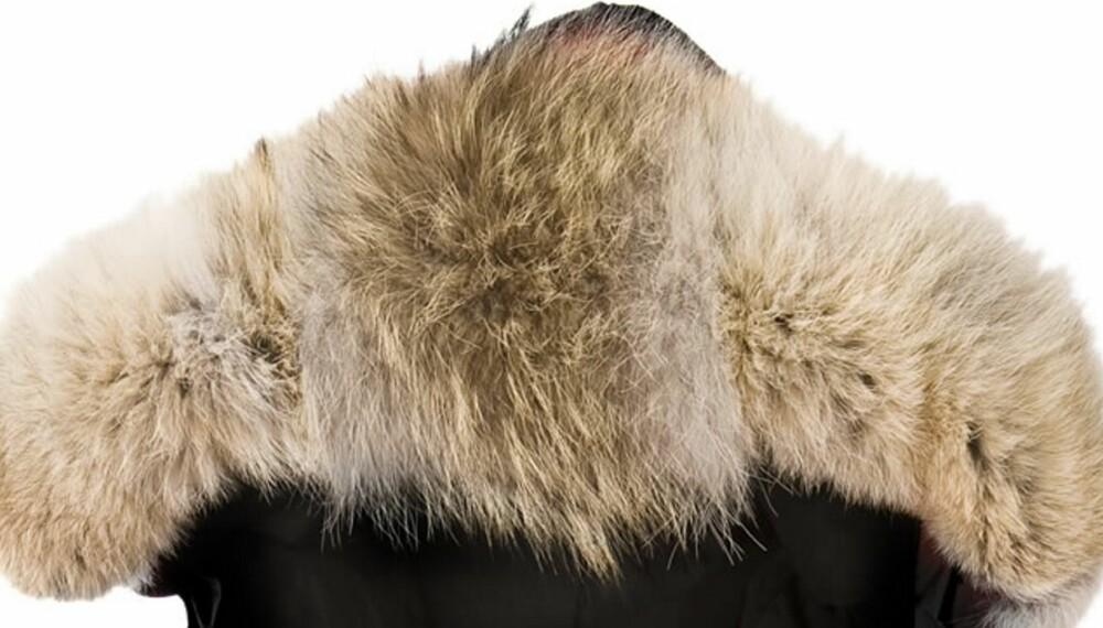 82912ba0 Ifølge Dyrevernalliansen kommer pelskragen som de populære jakkene har,  blant