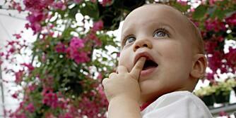 GIFTIGE PLANTER: Flere giftige planter kan ha både bær, blomster og blader som ser fristende ut.