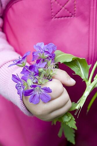 Blomster plukkes av barna til hendene er helt klamme.