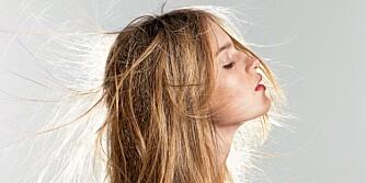 FLATT HÅR: Nordisk hår er ofte tynt og flatt, men det finnes hår. Foto: Bulls