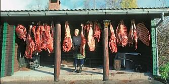 HENGES: Viltkjøtt bør henges luftig i rundt 40 døgngrader før det fryses. Her er et stort laken som verner mot sollys fjernet for fotografens skyld. (Foto: Dag Kjelsaas)