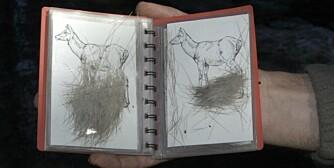 En snitthårsbok er et hendig redskap for å fastslå hvor på dyret håret kommer fra. (Foto: Knut Brevik)