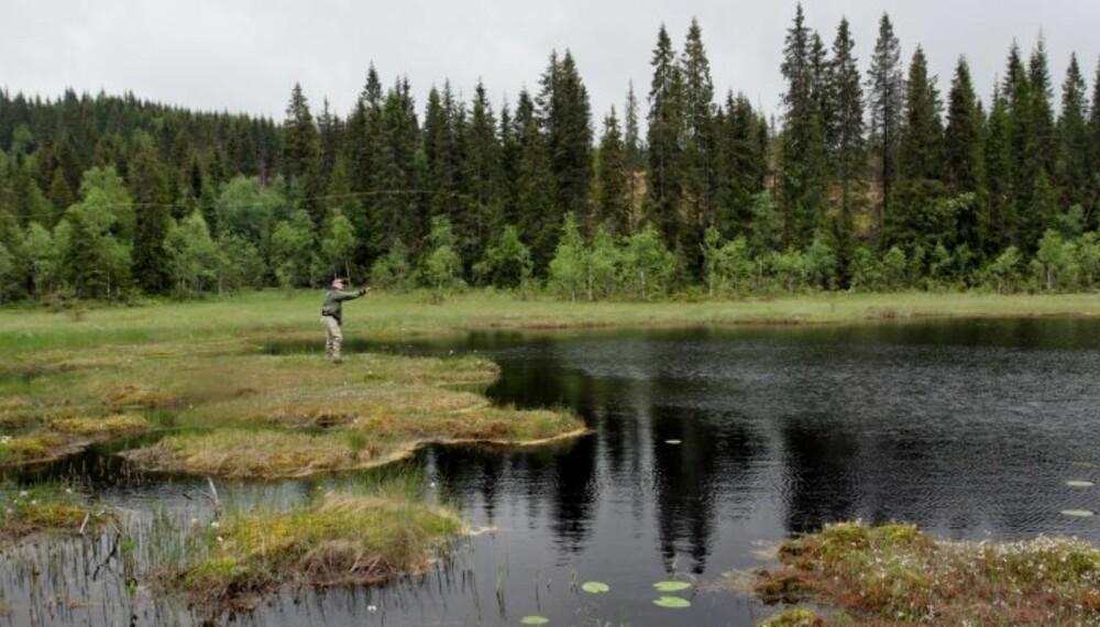 SMÅ VANN, STORE FISKER: Prøv gjerne de minste vannene, men gå forsiktig på myra så du ikke skremme fisken! (Foto: Dag Kjelsaas)