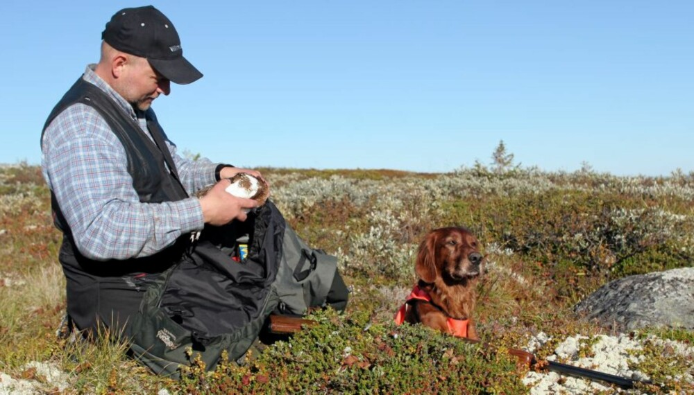 Utenbygds småviltjegere med stående fuglehunder støvsuger fjellet for rype - myte eller sannhet?