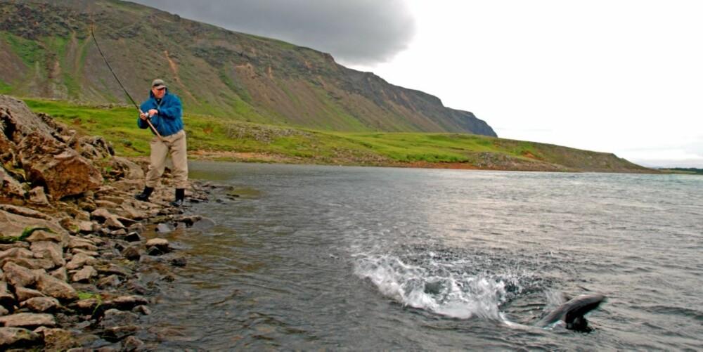 TANNASTAÐIR: Sigurd tok den første laksen sin på spinner der Sog og Hvitá renner sammen.