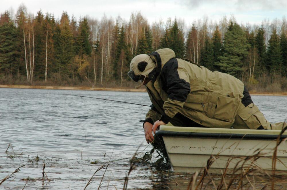 HJELPENDE HÅND: Femkilosgjedda kjører seg fast i sivet, og Jan må ut med båten for å få fisken løs.