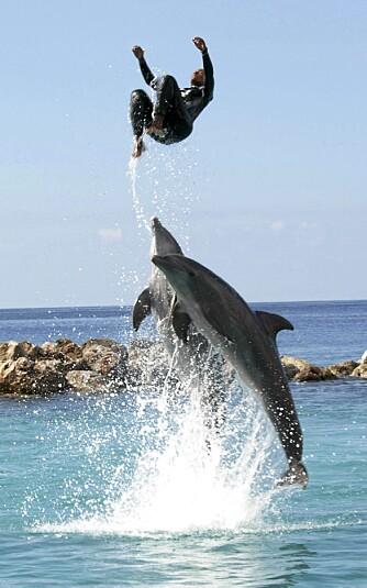 IMPONERENDE: På Curacao Sea Aquarium & Dolphin Academy kan du både se et fantastisk delfinshow og selv svømme med delfinene.