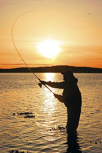 SOLNEDGANG: Det beste sjøørretfisket starter ved solnedgang.
