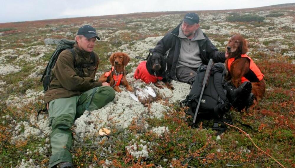 Rypejakt: Flott vær, nydelig jaktterreng, gode bikkjer og noen ryper til hver... (Foto: Dag Kjelsaas)