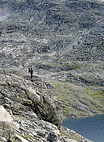 BRATT OG GOLDT: Ofte kan en lure på hva fjellrypa livnærer seg på i det golde terrenget.